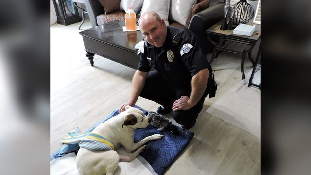 Dog hit by car, rescued by cop is fighting to stay alive